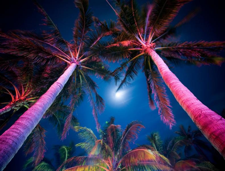 Full moon between two palm trees