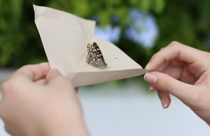 Butterfly being released from a piece of paper