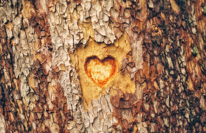 A small heart carved into a tree