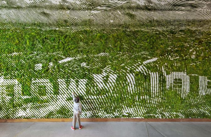 Hollywood Moss Wall with Boy