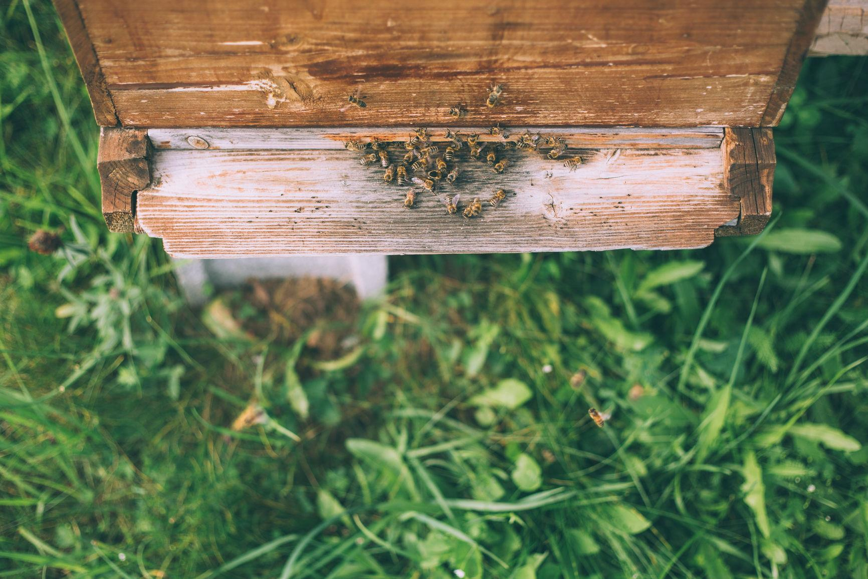 Honeybees Are Here To Help
