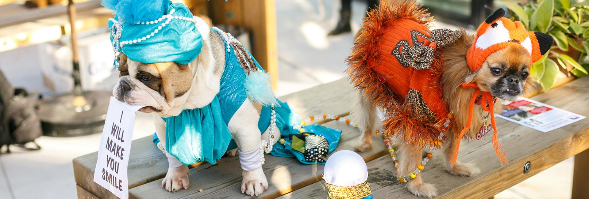 Two small dogs in fortune teller costumes