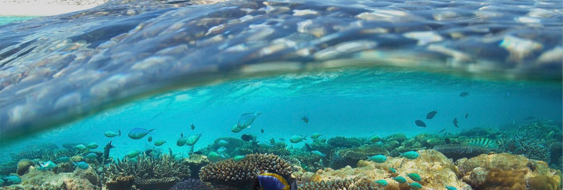 World Reef Day