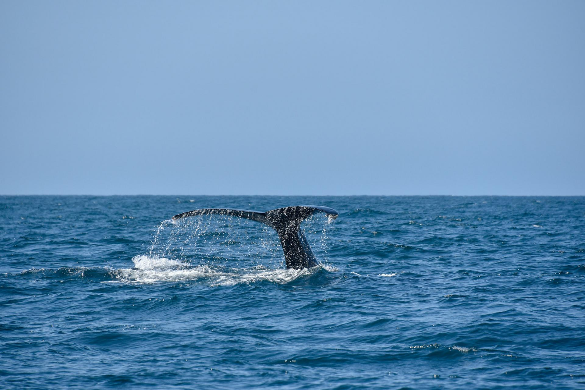 Whale in Cabo